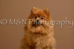 M&N Photography -_SNB0891