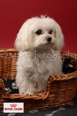 M&N Photography -M&N Photography-DSC_6820