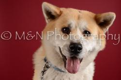 M&N Photography -DSC_3344