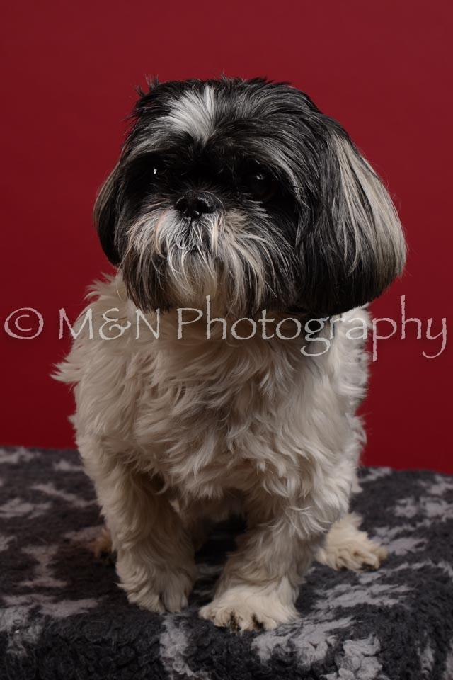 M&N Photography -DSC_3587