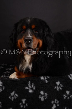 M&N Photography -DSC_5718
