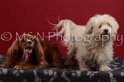 M&N Photography -DSC_3529