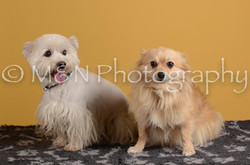M&N Photography -DSC_4835