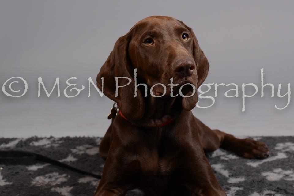 M&N Photography -DSC_2610