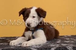 M&N Photography -DSC_4713