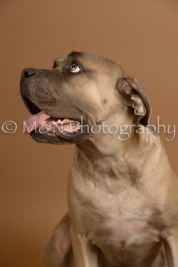 M&N Photography -_SNB0585