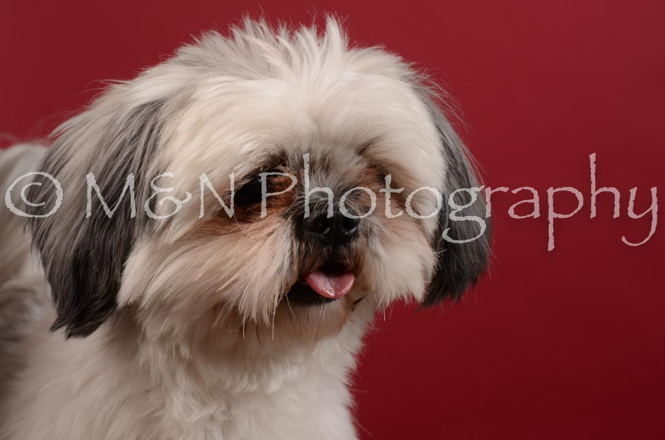 M&N Photography -DSC_3512