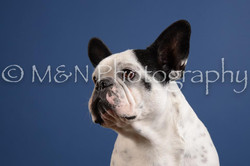 M&N Photography -DSC_5004-2