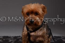 M&N Photography -DSC_2136