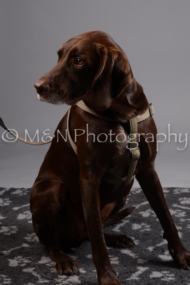 M&N Photography -DSC_2674