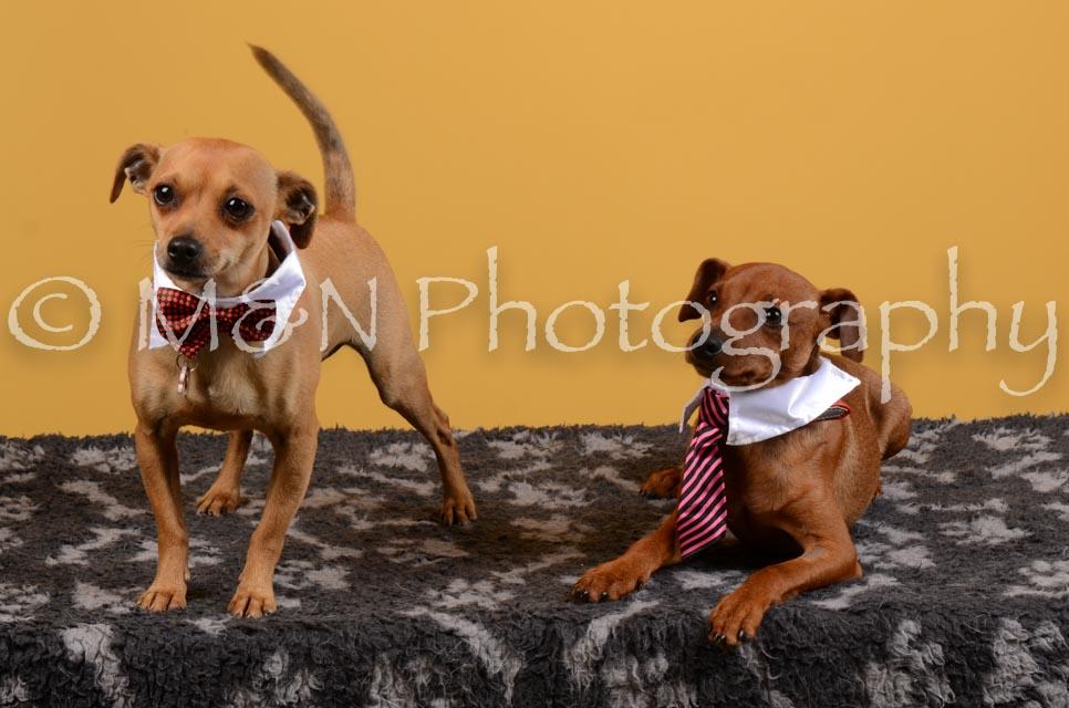 M&N Photography -DSC_4646