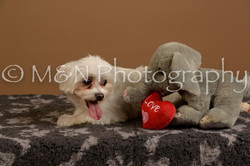M&N Photography -_SNB0803