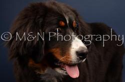 M&N Photography -DSC_3779