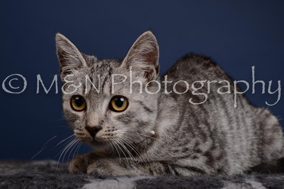 M&N Photography -DSC_4272