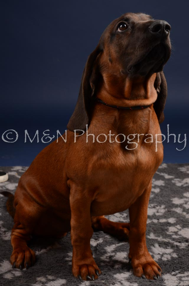 M&N Photography -DSC_0255