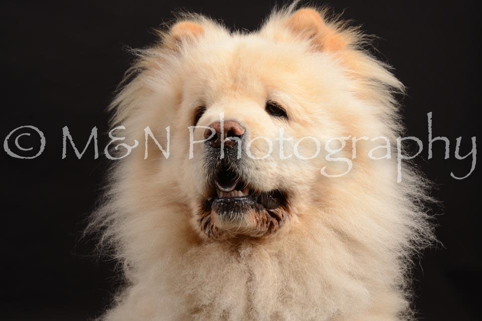 M&N Photography -DSC_9681
