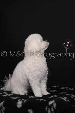 M&N Photography -DSC_5613
