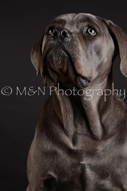 M&N Photography -DSC_5586
