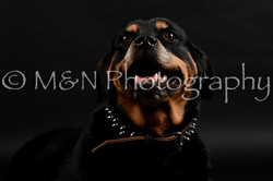 M&N Photography -DSC_2377