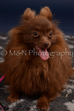M&N Photography -DSC_0430