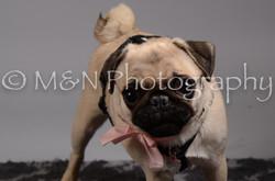 M&N Photography -DSC_2822