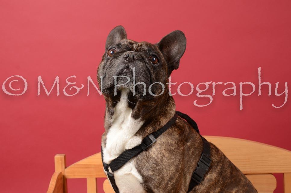 M&N Photography -DSC_6640