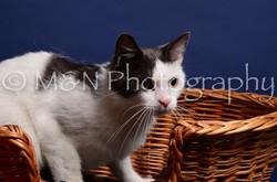 M&N Photography -IMG_4479