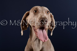 M&N Photography -DSC_4135