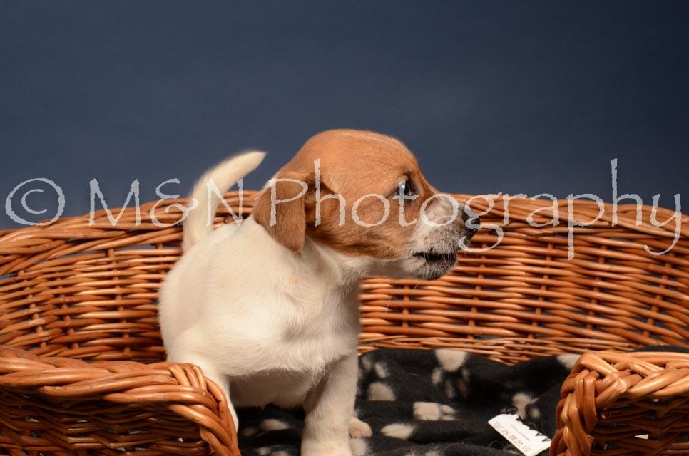 M&N Photography -DSC_4084