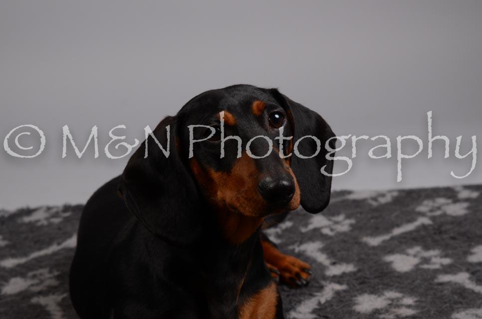 M&N Photography -DSC_2868
