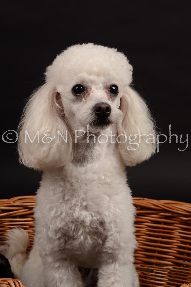M&N Photography -DSC_9973