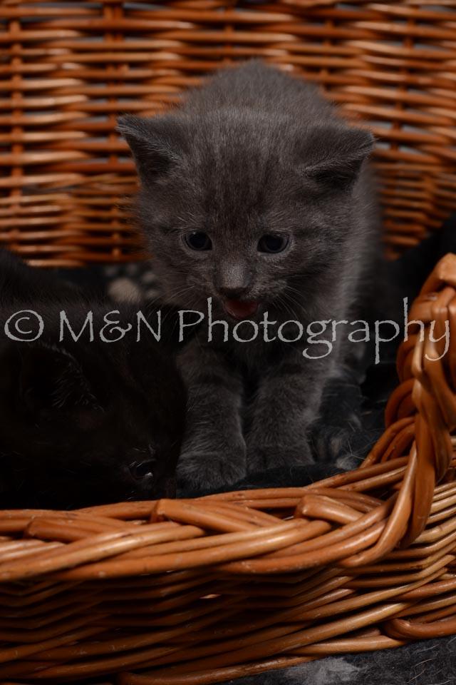 M&N Photography -DSC_2364
