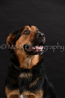 M&N Photography -DSC_2459