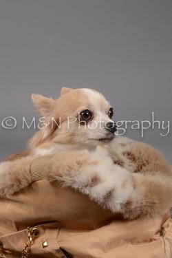 M&N Photography -DSC_1649