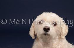 M&N Photography -DSC_0394