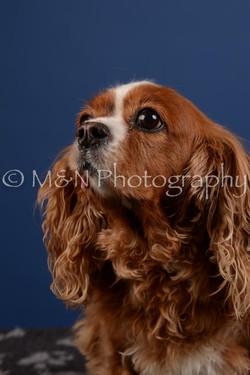 M&N Photography -DSC_5168