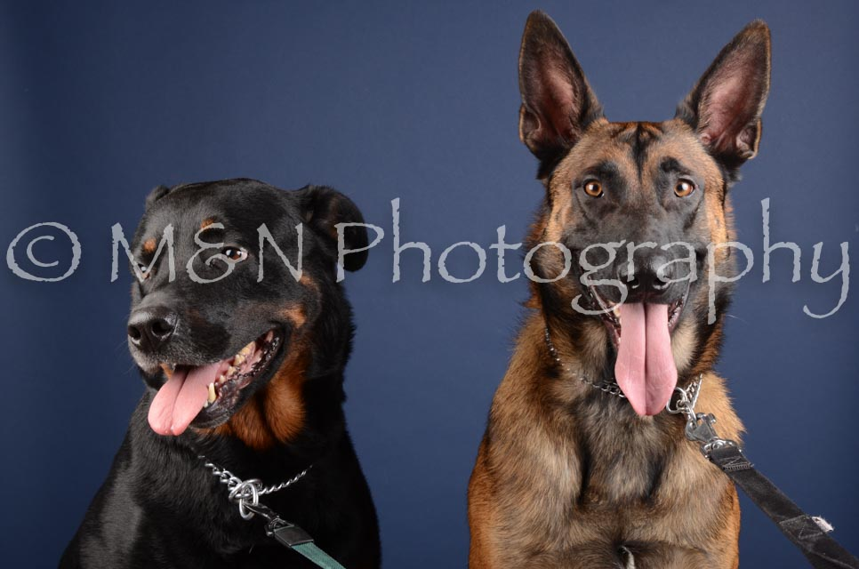 M&N Photography -DSC_3998