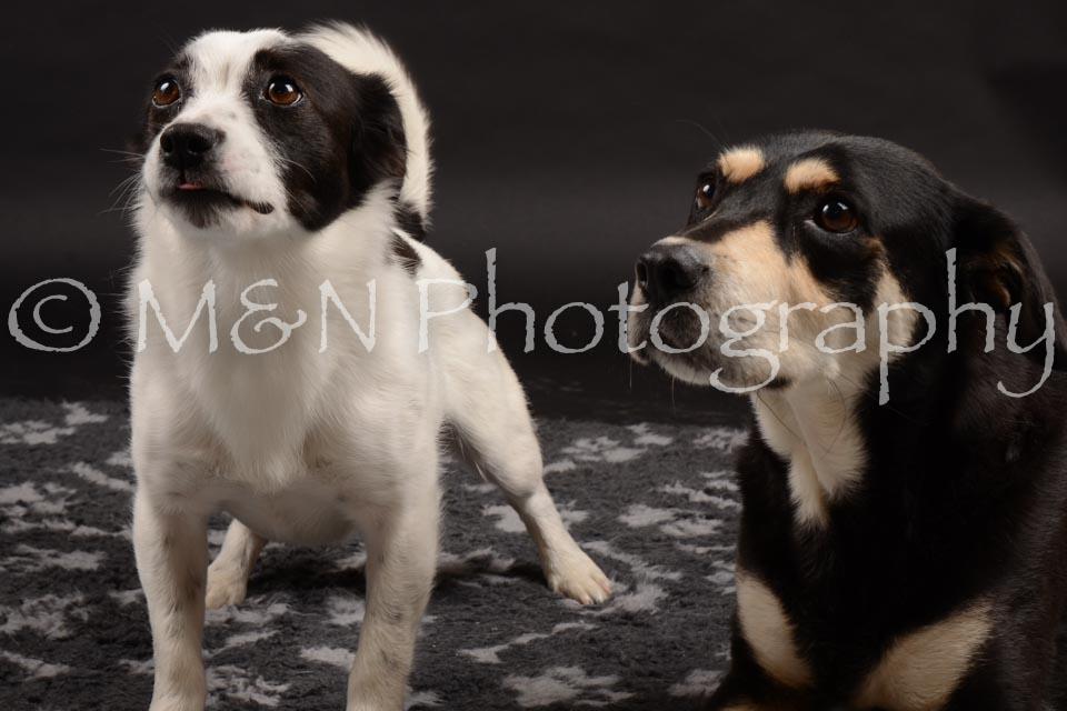 M&N Photography -DSC_9872