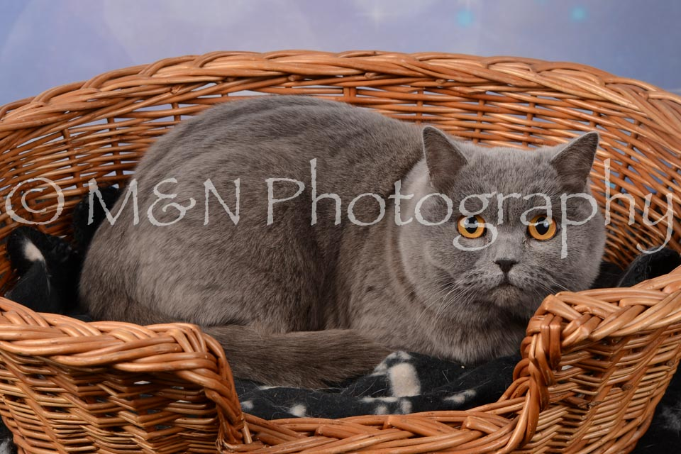 M&N Photography -DSC_6840