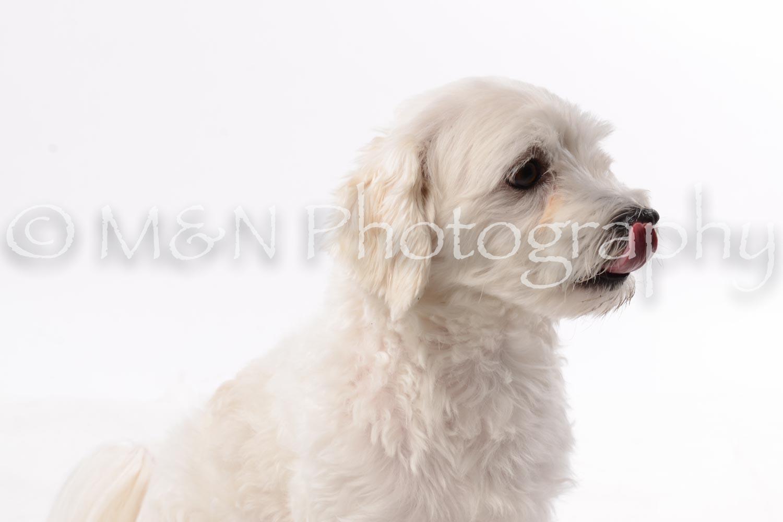 M&N Photography -DSC_8983