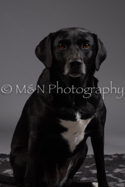 M&N Photography -DSC_2022