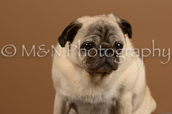 M&N Photography -_SNB0608