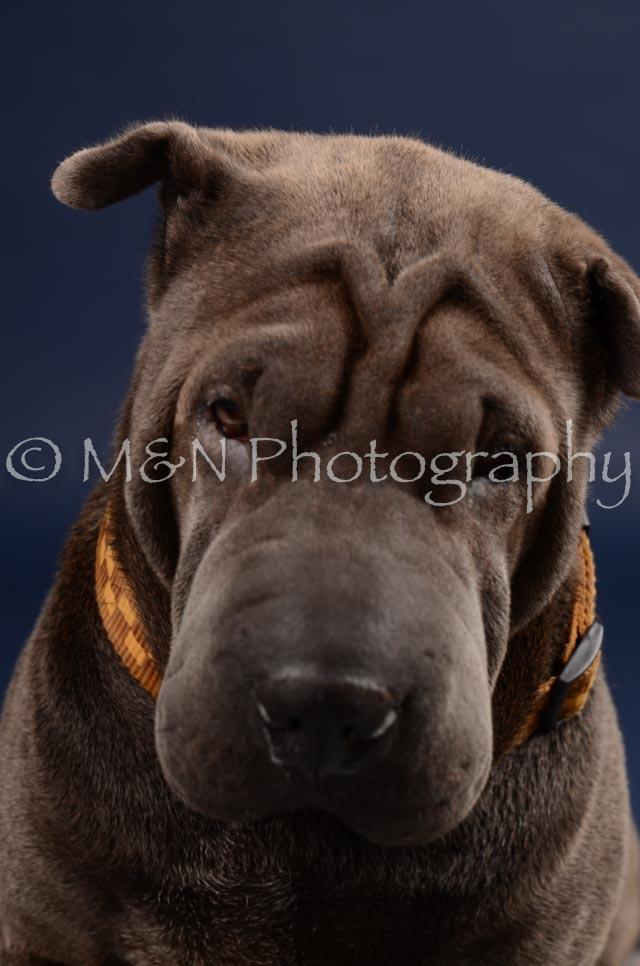 M&N Photography -DSC_0283