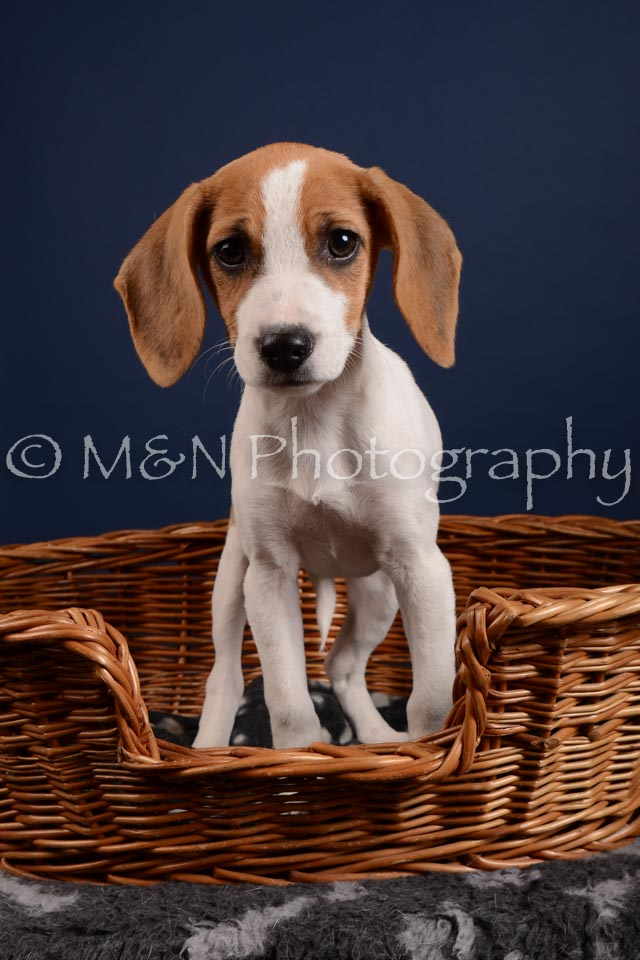 M&N Photography -DSC_4165