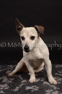 M&N Photography -DSC_0093