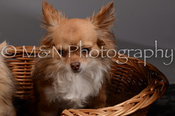 M&N Photography -DSC_1830