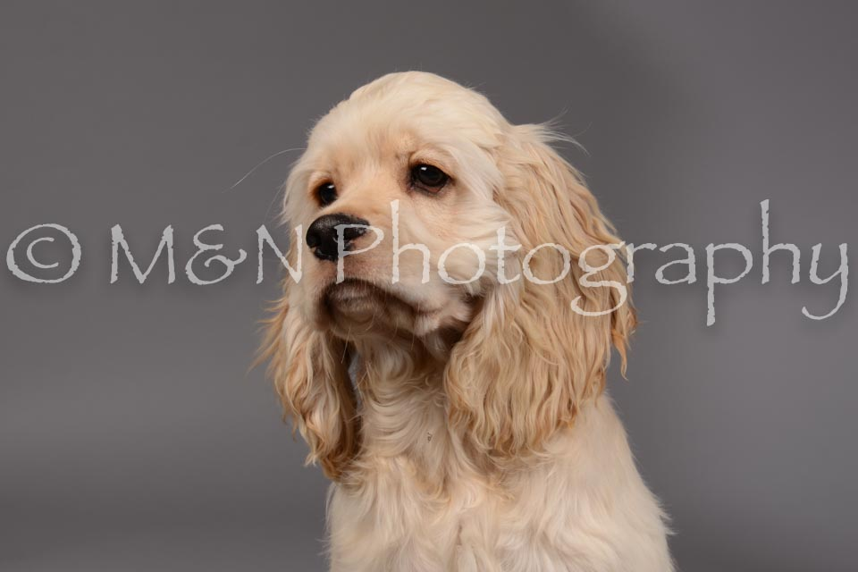 M&N Photography -DSC_1850