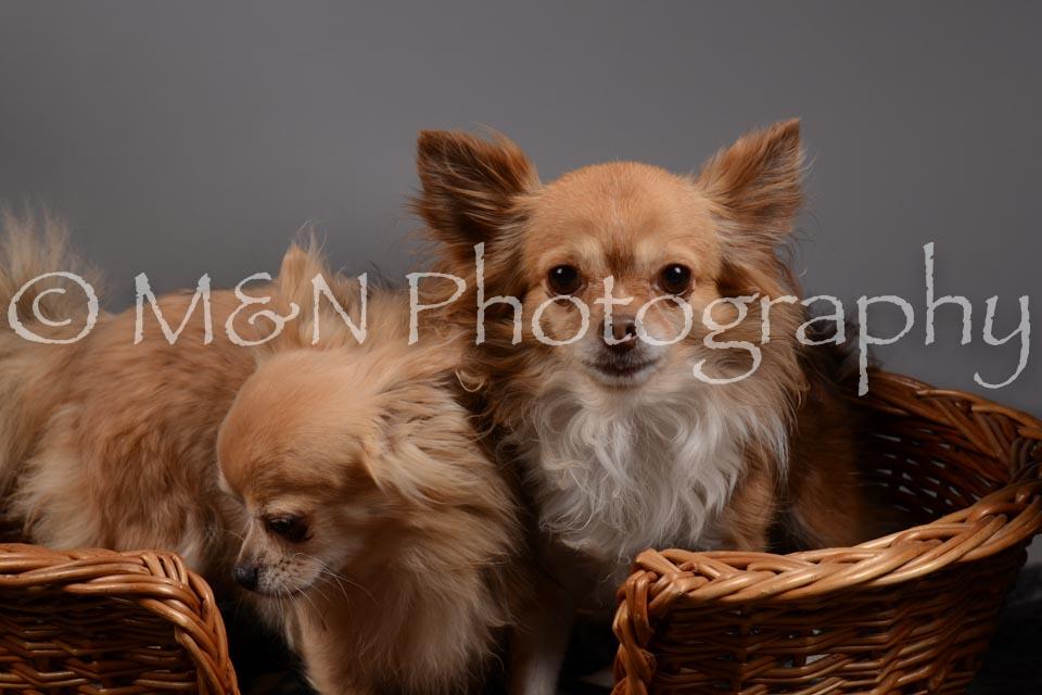 M&N Photography -DSC_1817