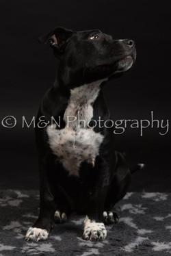 M&N Photography -DSC_2652