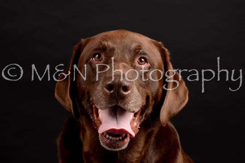 M&N Photography -DSC_0044
